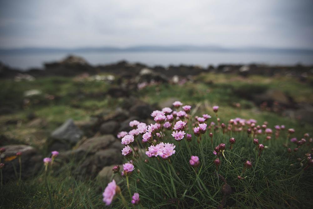 Coral beach, Scotland