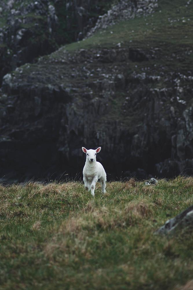 Waterstein Head, Scotland